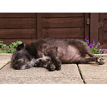 Bailey - The Patterdale (Fell Terrier)  Photographic Print