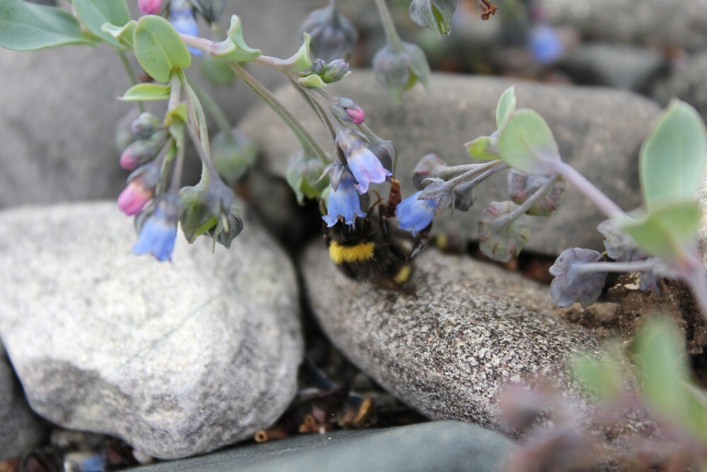 Nesten blomster og bier by Ruth Vihovde