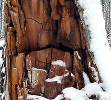 Dead Tree In Winter by Brenda Hagenson
