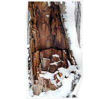 Dead Tree In Winter Poster