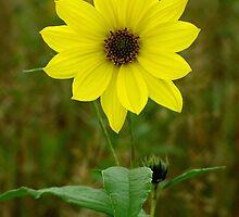 Spring Wildflower by Brenda Hagenson