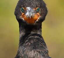 Cormorant Attitude by William C. Gladish