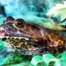 Bullfrog Profile by Susan Savad