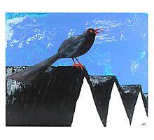 Blackbird Photographic Print