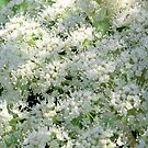 Woodland Angelica by Kathleen M. Daley