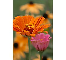 Colors of Summer Photographic Print