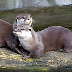 Otters by Mdgraphix