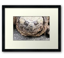 Alligator Snapping Turtle (Closeup) Framed Print