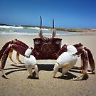 Straddie crab by Matt Mawson