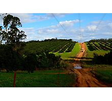 4wd fruit trees  Photographic Print