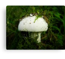 Undercover Mushroom Canvas Print
