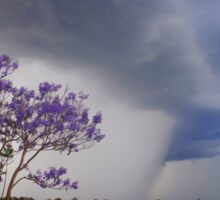 Jacaranda Storms Sticker