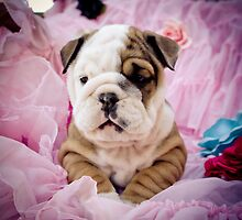 Pink Pinup Pup by MeganRizzoPhoto