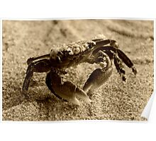 Little Crab Poster