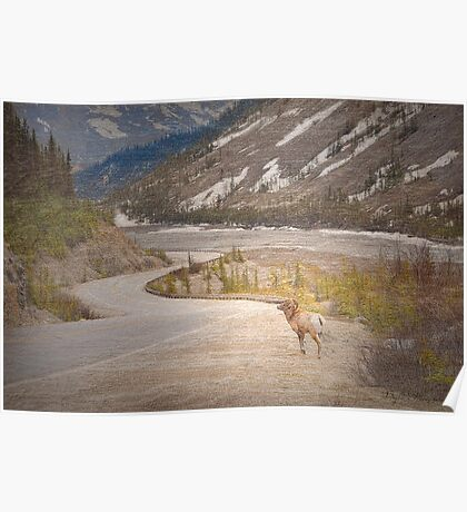 Along the Icefields Parkway Poster