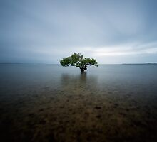 """I Stand Alone"" ? King Island, QLD - Australia by Jason Asher"