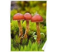 Fungi triplet Poster