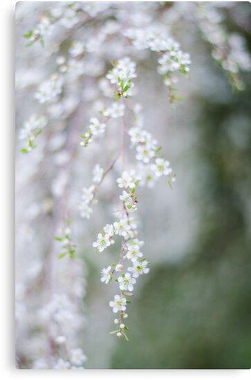 Veil... by Carol Knudsen