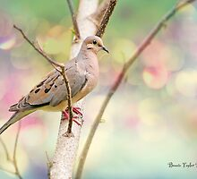 Peaceful Mourning Dove by Bonnie T.  Barry