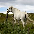 White Horse by Nicola Lee