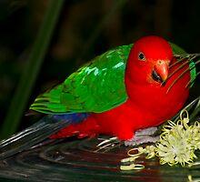 King Parrot by GayeL Art