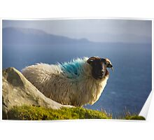 Sheep in Achill Poster