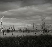Winton Wetlands by Natalie Ord