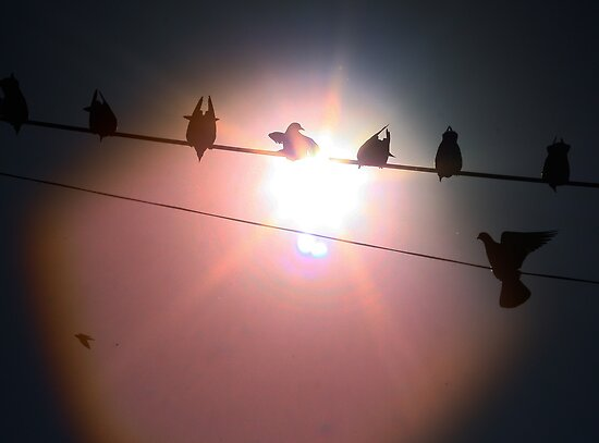 Birds on a wire - India by fionapine
