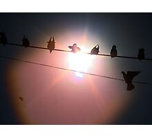 Birds on a wire - India Photographic Print