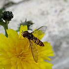 hoverfly by Enri-Art