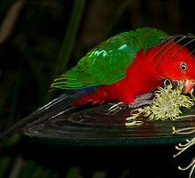 King Parrot feeding by GayeL Art