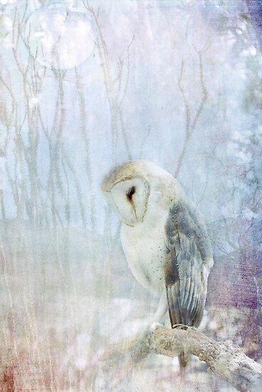 Ghost Owl by Lynn Starner
