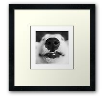 Molly - English Bull Terrier Framed Print