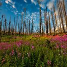 Summer in the Burn Scar - Rio Grande Valley, CO by Ryan Wright