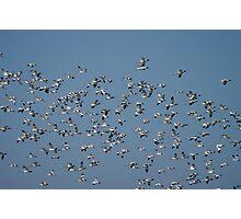 The Flock Photographic Print