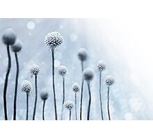 Blue Sunshine Photographic Print