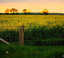 Fields Of Gold by Chris Britton
