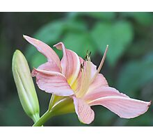 A Dream of a Lily Photographic Print