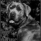 No more color banner by Jim Butera