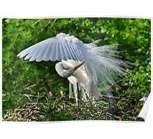 Majestic Egret Poster