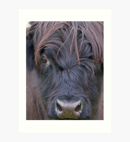 Black Hairy Coo Art Print