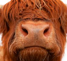 Kissing Hairy Coo by Karen Marr