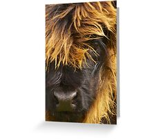 Eyeful of Hairy Coo Greeting Card