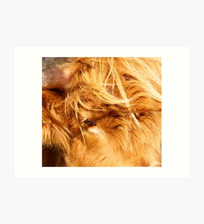 Eye of Hairy Coo Art Print