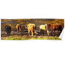 Walk away Hairy Coo Poster