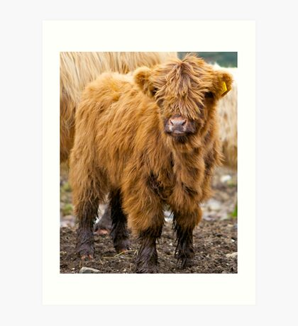 Little Hairy Coo Art Print
