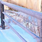 Frosty Fence by Yannik Hay