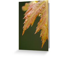 New Maple Leaves in Spring Greeting Card