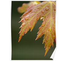 New Maple Leaves in Spring Poster
