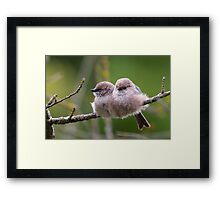 Bushtit Siblings Framed Print